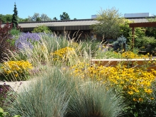 Grasses in flower border. Colorado Springs Utilities. Mesa Xeriscape Demonstration Garden